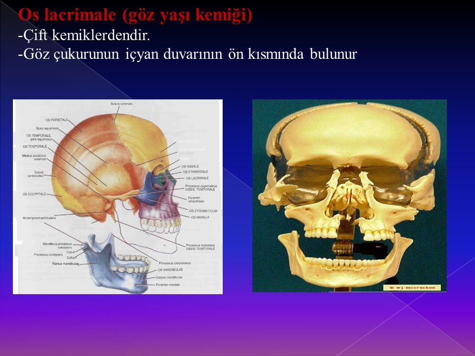 Os lacrimale (göz yaşı kemiği)