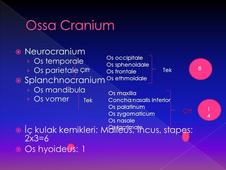 Ossa Cranium Neurocranium Splanchnocranium