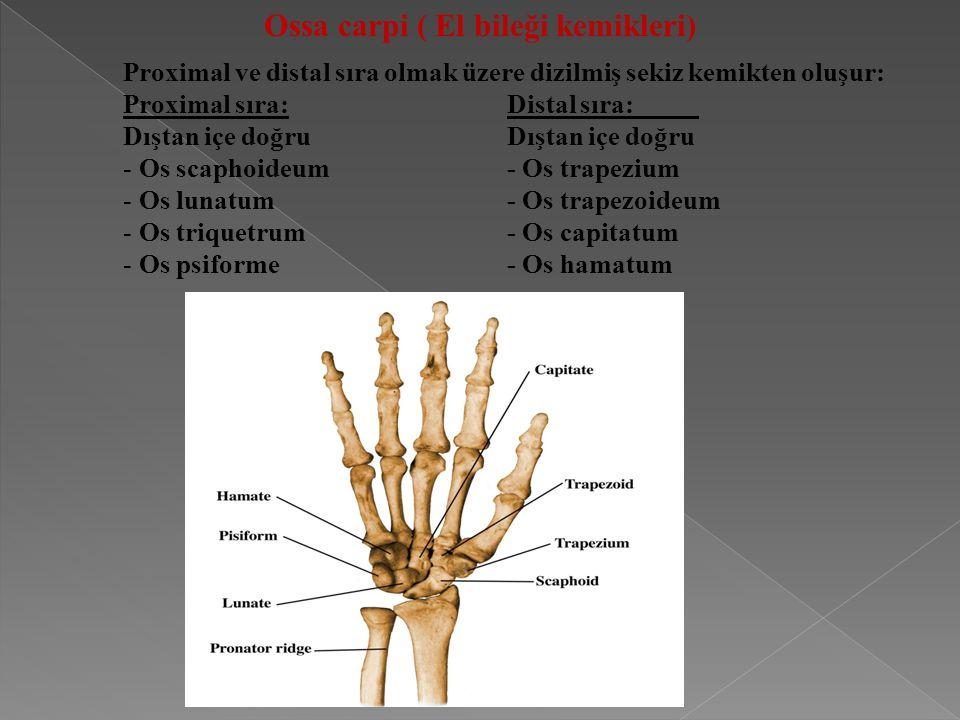 Ossa carpi ( El bileği kemikleri)