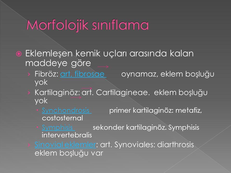 Morfolojik sınıflama Eklemleşen kemik uçları arasında kalan maddeye göre. Fibröz: art. fibrosae oynamaz, eklem boşluğu yok.