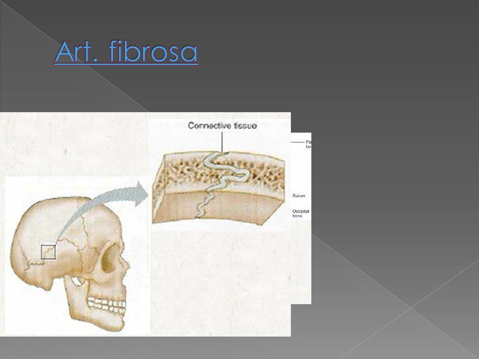Art. fibrosa