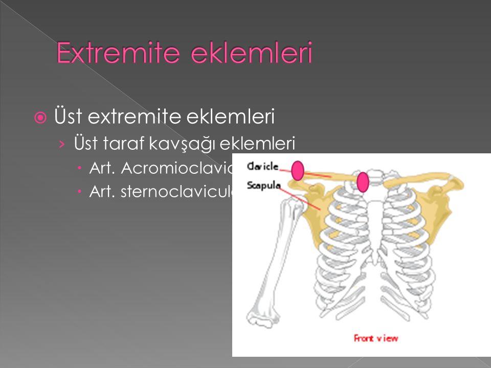 Extremite eklemleri Üst extremite eklemleri