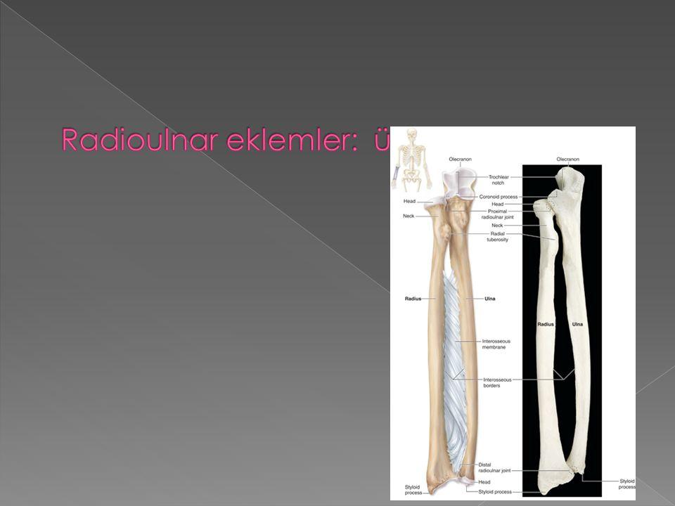 Radioulnar eklemler: üst-orta ve alt