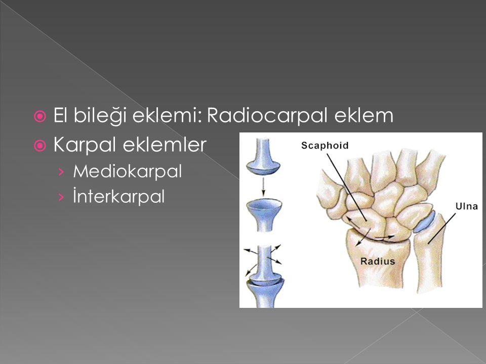 El bileği eklemi: Radiocarpal eklem Karpal eklemler