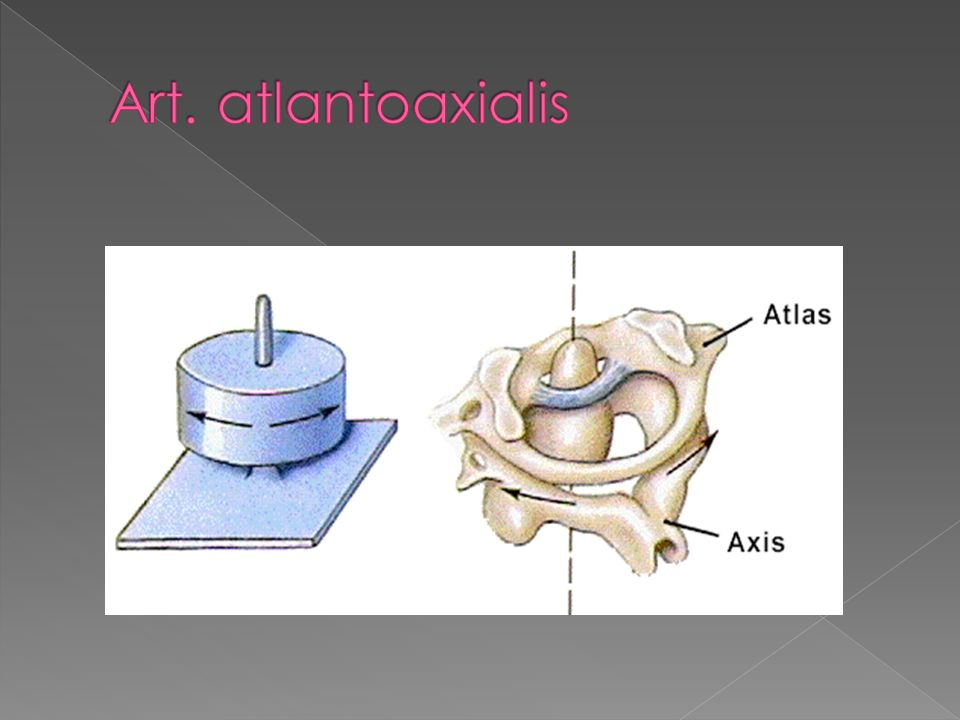 Art. atlantoaxialis