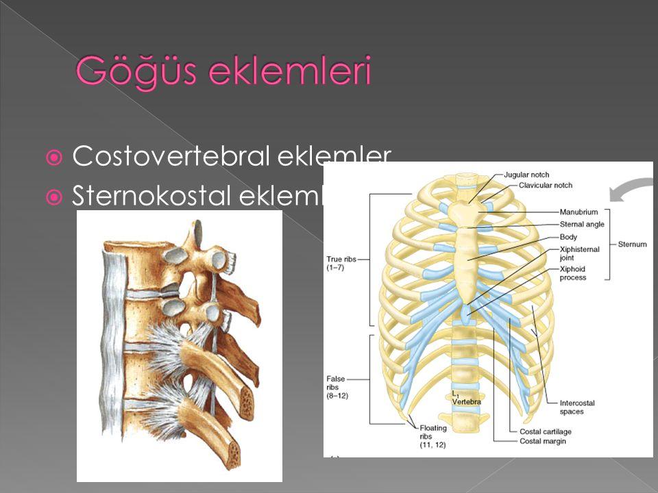 Göğüs eklemleri Costovertebral eklemler Sternokostal eklemler