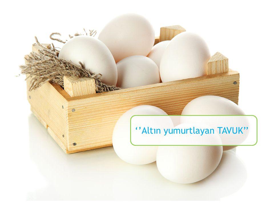 ''Altın yumurtlayan TAVUK''