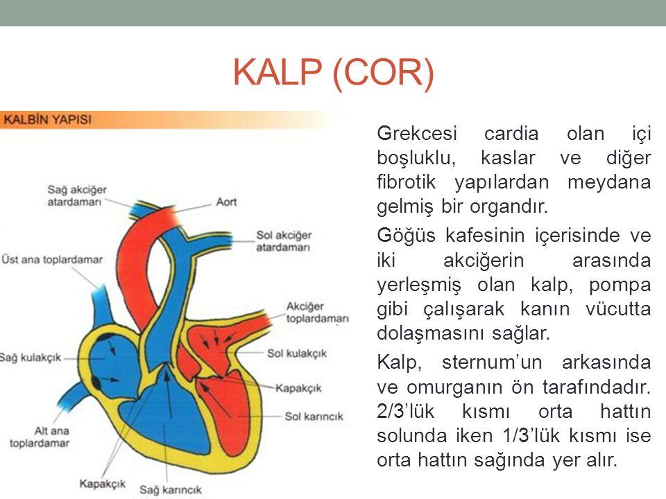 KALP (COR)