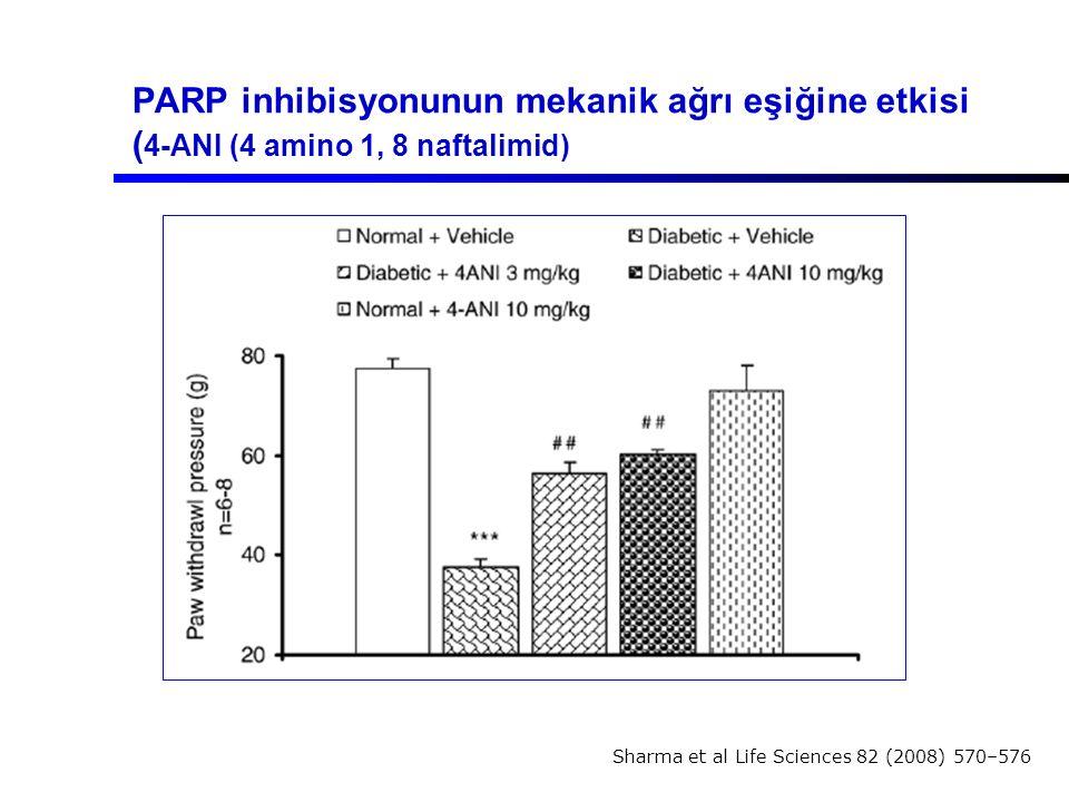 PARP inhibisyonunun mekanik ağrı eşiğine etkisi (4-ANI (4 amino 1, 8 naftalimid)