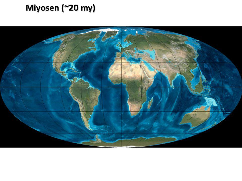 Miyosen (~20 my)