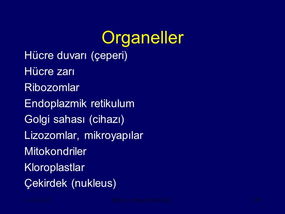 Organeller Hücre duvarı (çeperi) Hücre zarı Ribozomlar