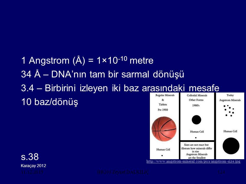 34 Å – DNA'nın tam bir sarmal dönüşü