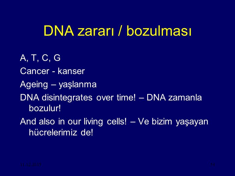 DNA zararı / bozulması A, T, C, G Cancer - kanser Ageing – yaşlanma