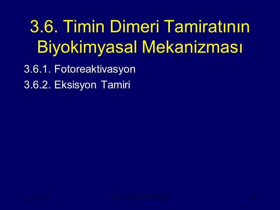 3.6. Timin Dimeri Tamiratının Biyokimyasal Mekanizması