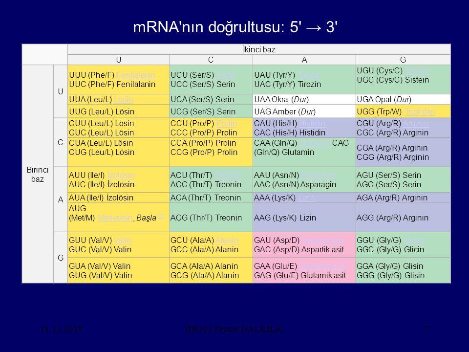 mRNA nın doğrultusu: 5 → 3 25.04.2017 BB203 Zeynel DALKILIÇ