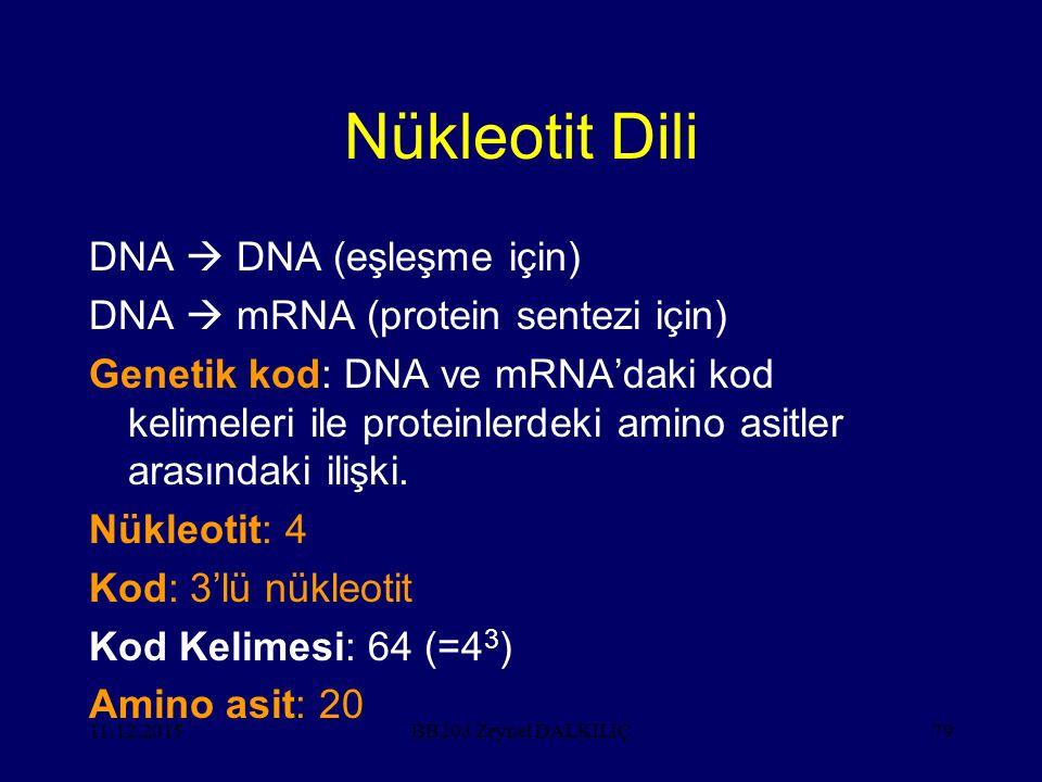 Nükleotit Dili DNA  DNA (eşleşme için)