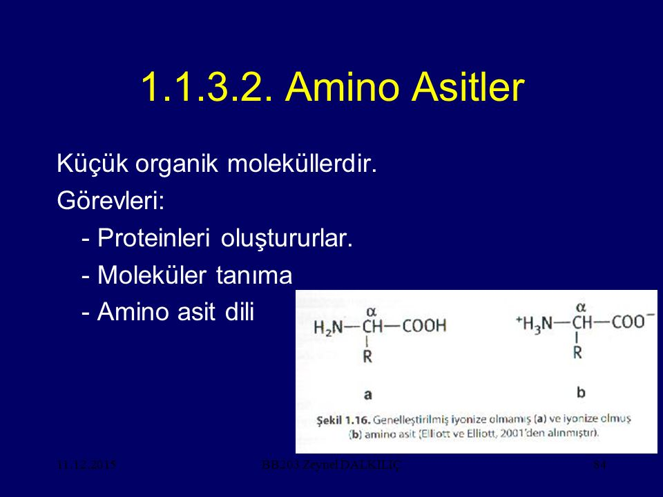 1.1.3.2. Amino Asitler Küçük organik moleküllerdir. Görevleri: