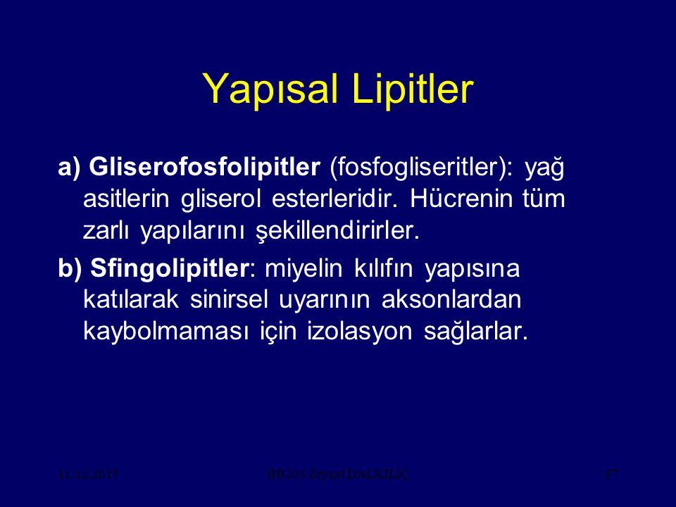 Yapısal Lipitler a) Gliserofosfolipitler (fosfogliseritler): yağ asitlerin gliserol esterleridir. Hücrenin tüm zarlı yapılarını şekillendirirler.