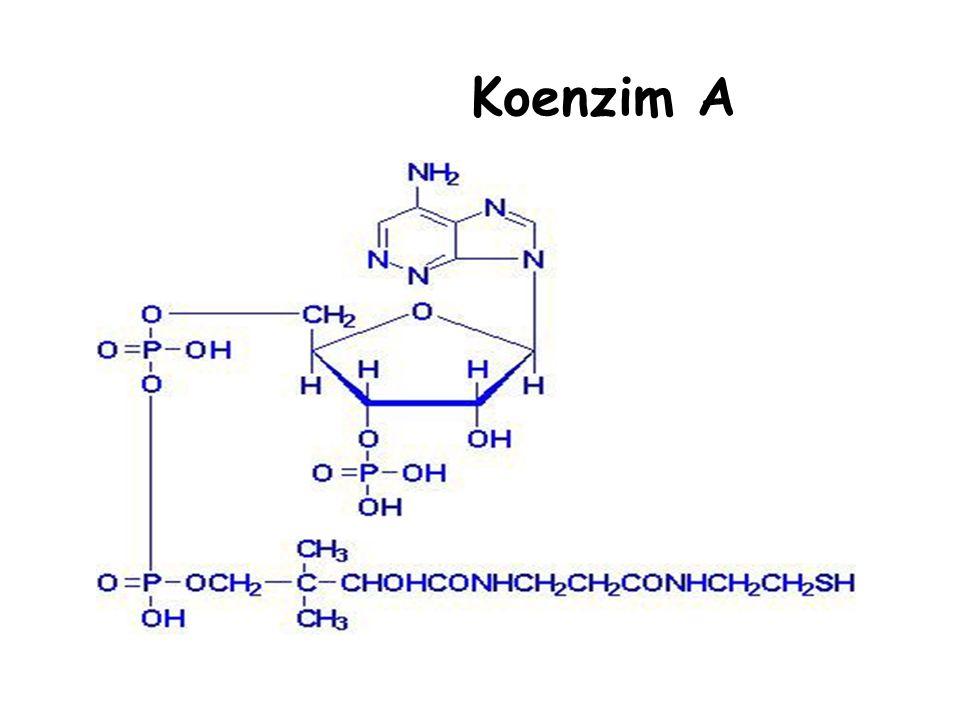 Koenzim A