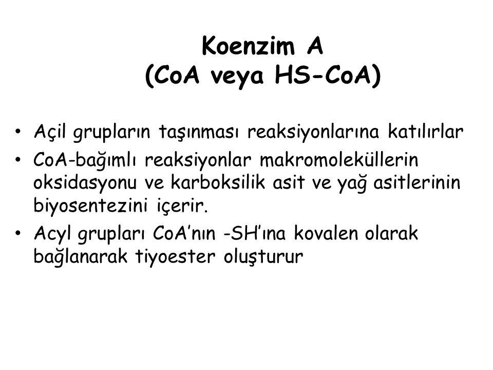 Koenzim A (CoA veya HS-CoA)