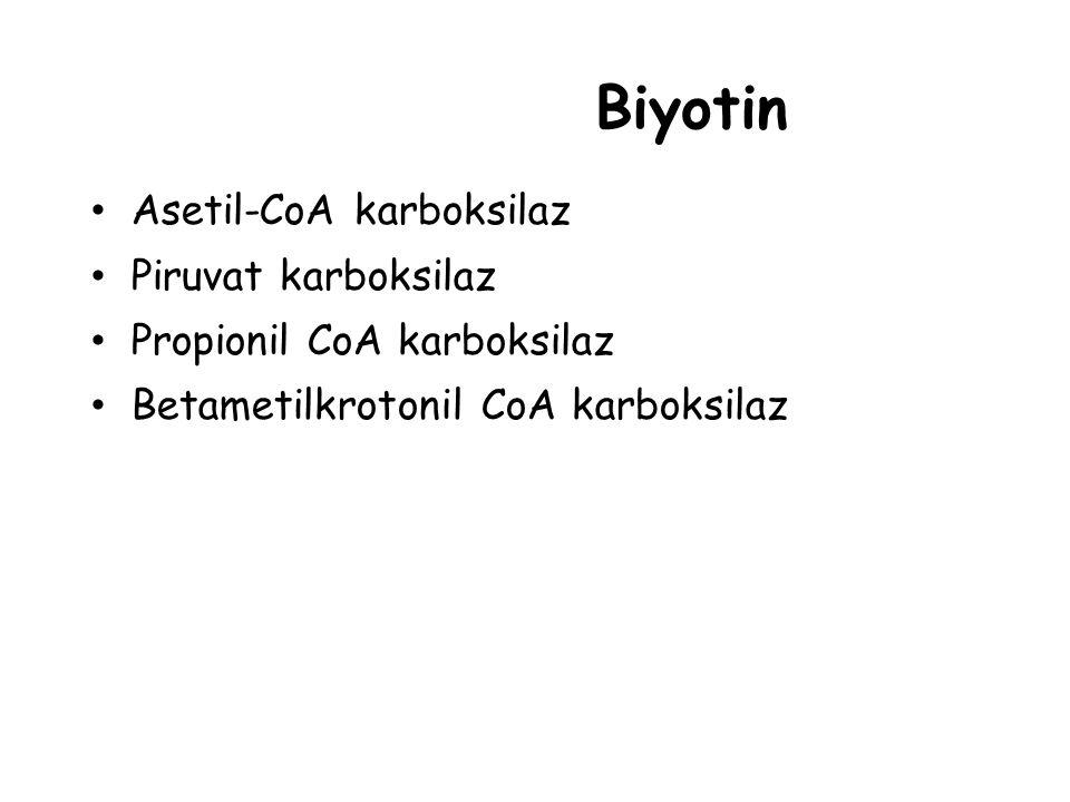 Biyotin Asetil-CoA karboksilaz Piruvat karboksilaz