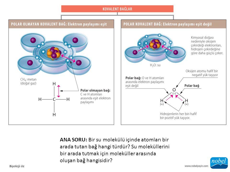 ANA SORU: Bir su molekülü içinde atomları bir