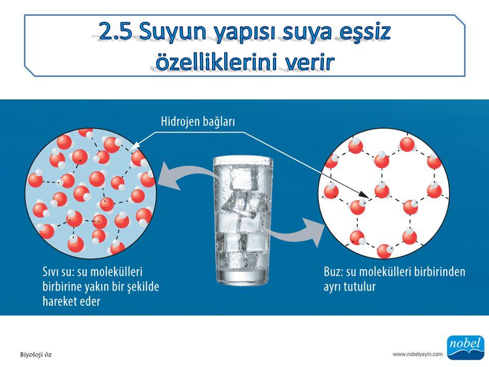 2.5 Suyun yapısı suya eşsiz özelliklerini verir
