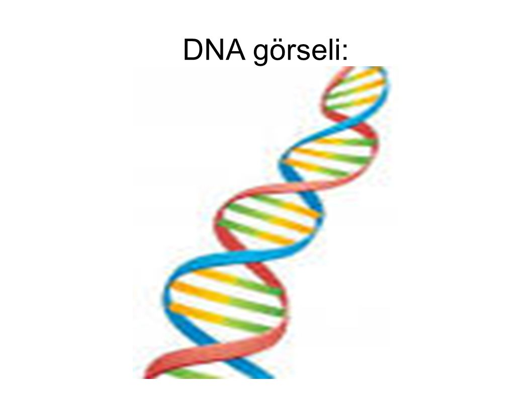 DNA görseli: