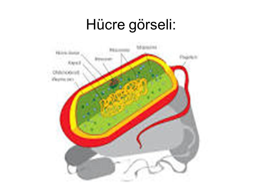 Hücre görseli: