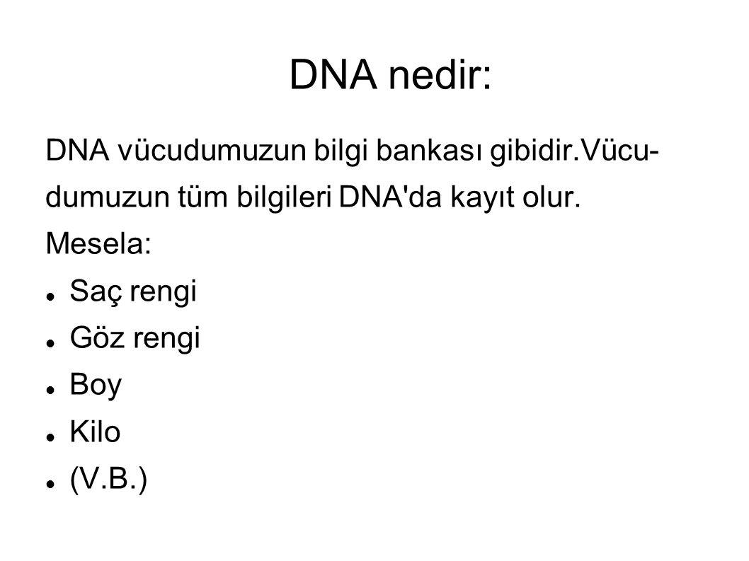 DNA nedir: DNA vücudumuzun bilgi bankası gibidir.Vücu-