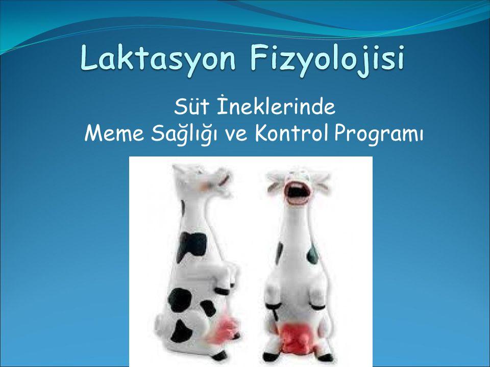 Laktasyon Fizyolojisi