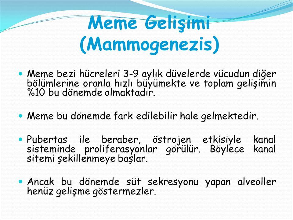 Meme Gelişimi (Mammogenezis)