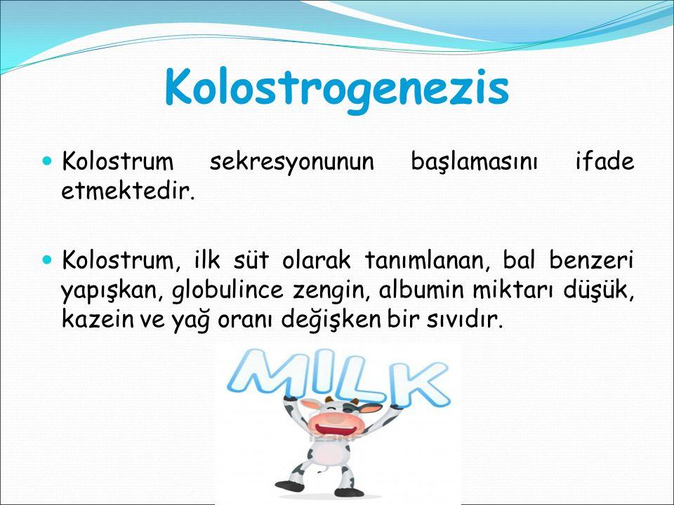 Kolostrogenezis Kolostrum sekresyonunun başlamasını ifade etmektedir.