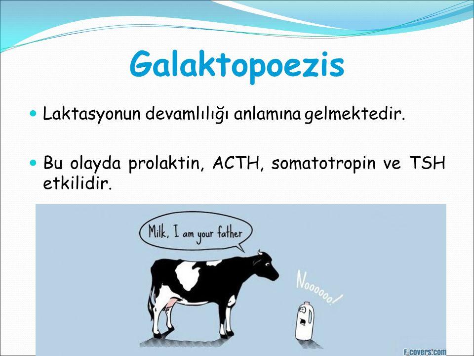 Galaktopoezis Laktasyonun devamlılığı anlamına gelmektedir.