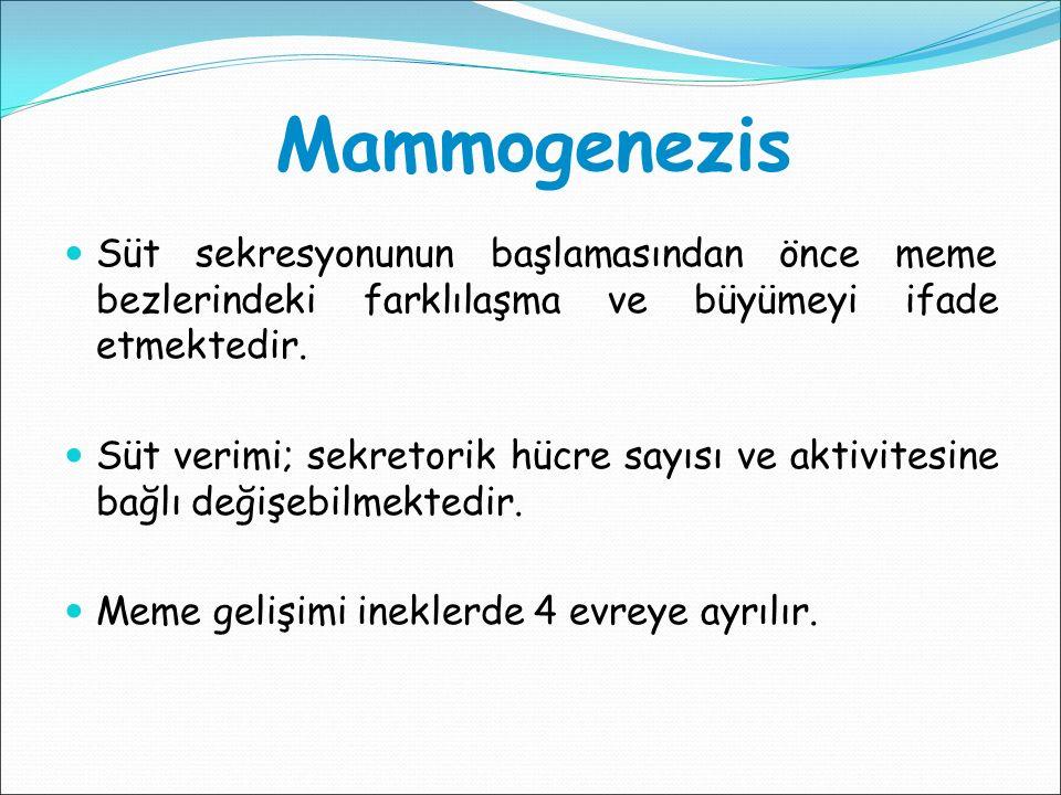 Mammogenezis Süt sekresyonunun başlamasından önce meme bezlerindeki farklılaşma ve büyümeyi ifade etmektedir.