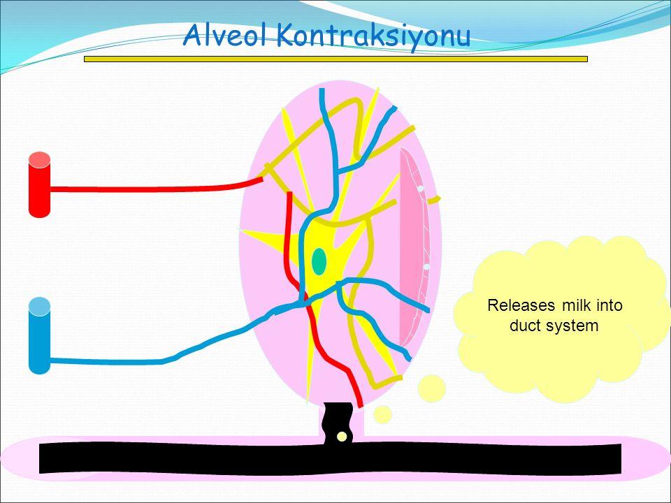 Alveol Kontraksiyonu Releases milk into duct system