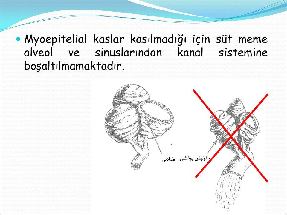Myoepitelial kaslar kasılmadığı için süt meme alveol ve sinuslarından kanal sistemine boşaltılmamaktadır.