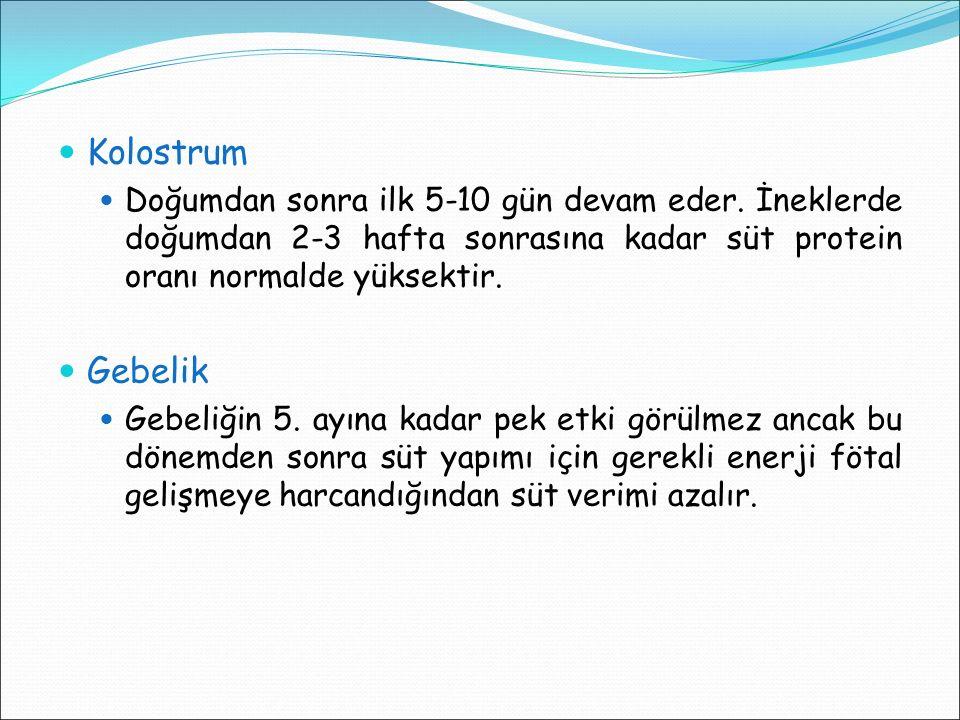 Kolostrum Doğumdan sonra ilk 5-10 gün devam eder. İneklerde doğumdan 2-3 hafta sonrasına kadar süt protein oranı normalde yüksektir.