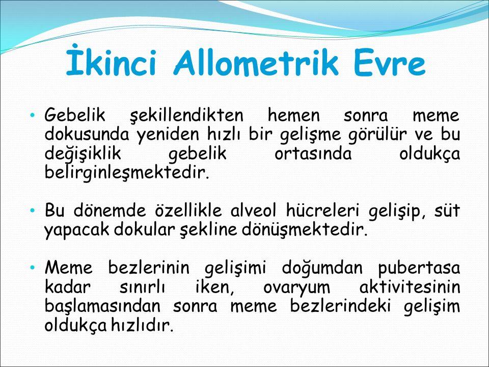 İkinci Allometrik Evre