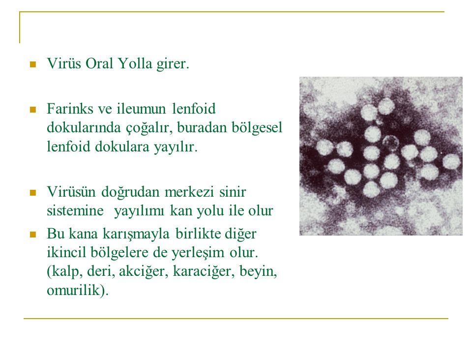 Virüs Oral Yolla girer. Farinks ve ileumun lenfoid dokularında çoğalır, buradan bölgesel lenfoid dokulara yayılır.