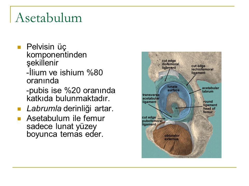 Asetabulum Pelvisin üç komponentinden şekillenir