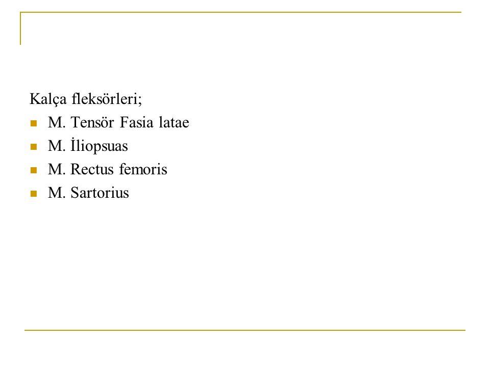 Kalça fleksörleri; M. Tensör Fasia latae M. İliopsuas M. Rectus femoris M. Sartorius