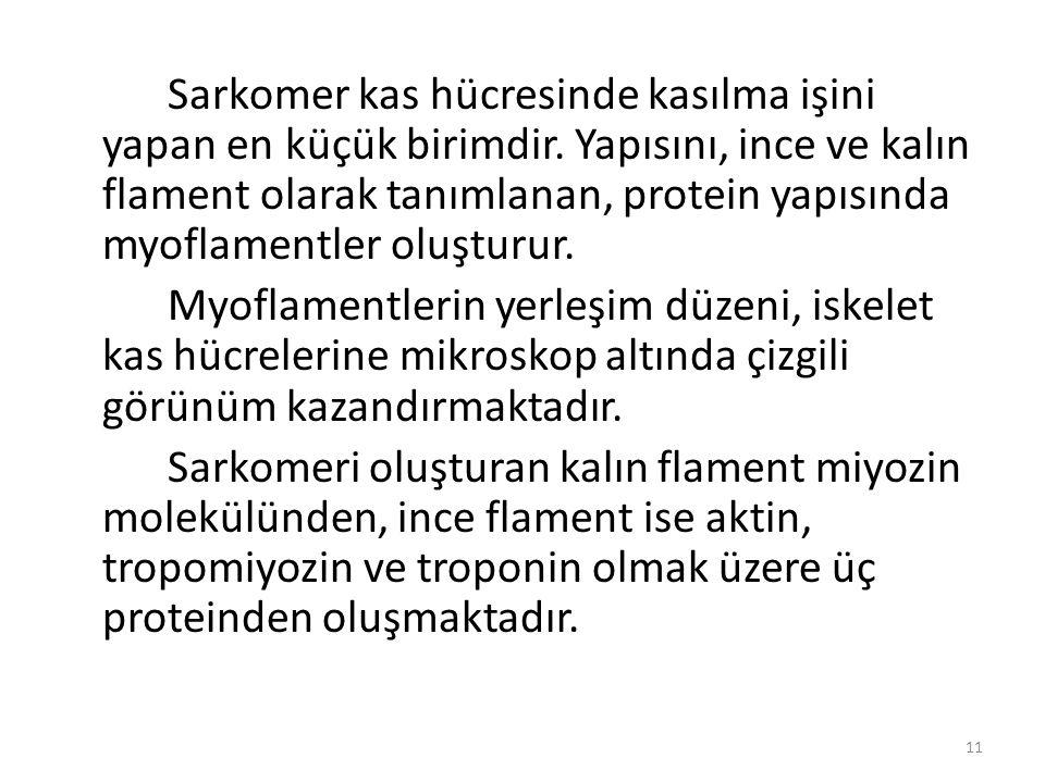 Sarkomer kas hücresinde kasılma işini yapan en küçük birimdir