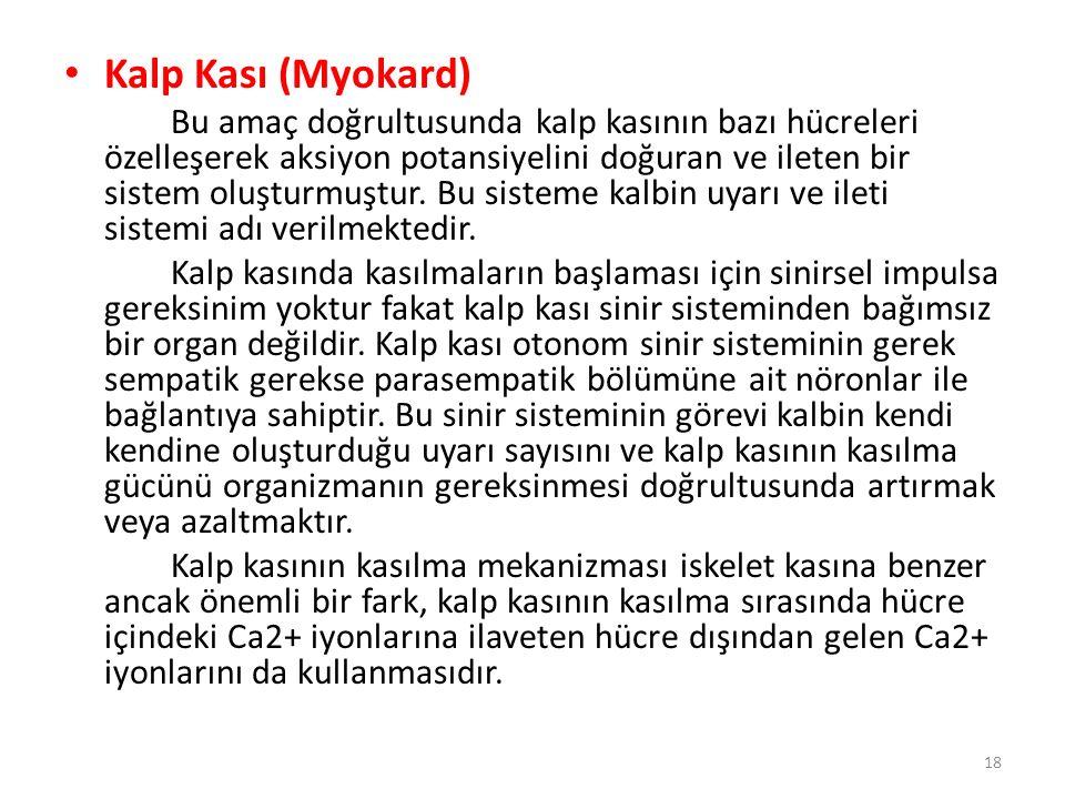 Kalp Kası (Myokard)
