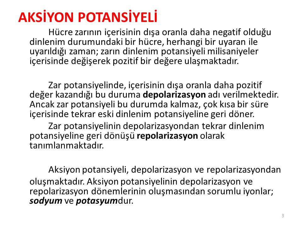 AKSİYON POTANSİYELİ