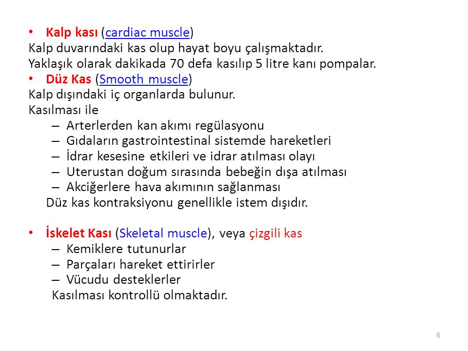 Kalp kası (cardiac muscle)