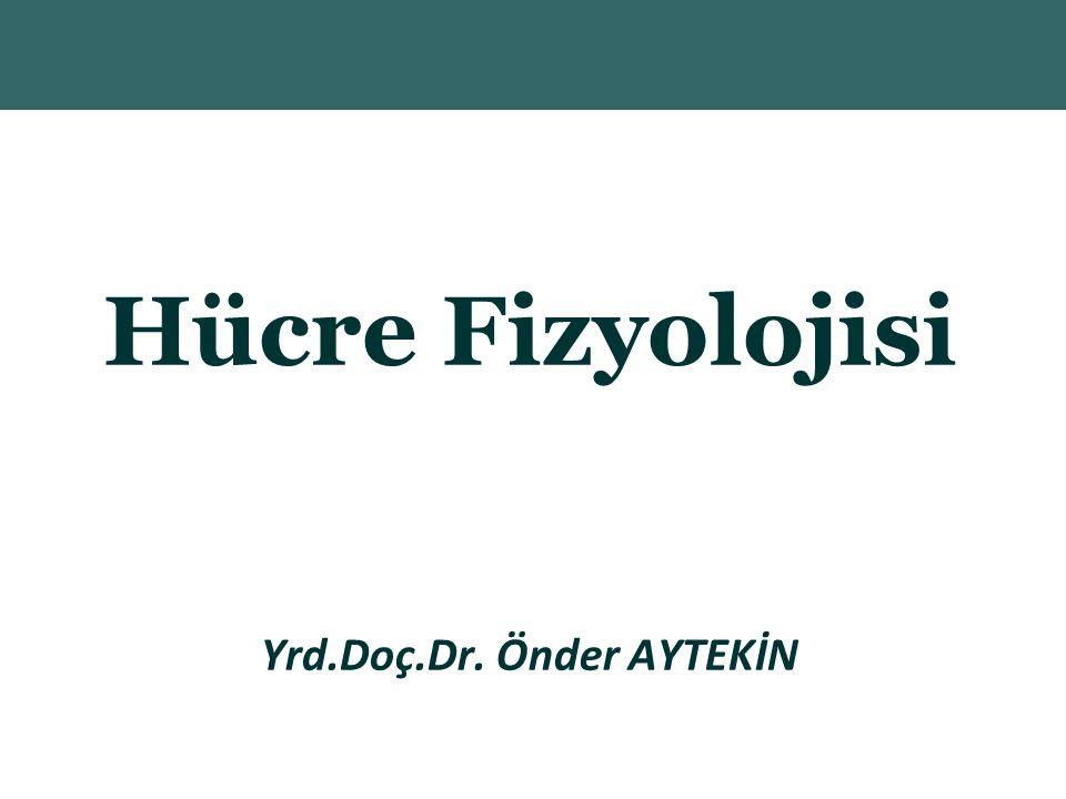 Yrd.Doç.Dr. Önder AYTEKİN