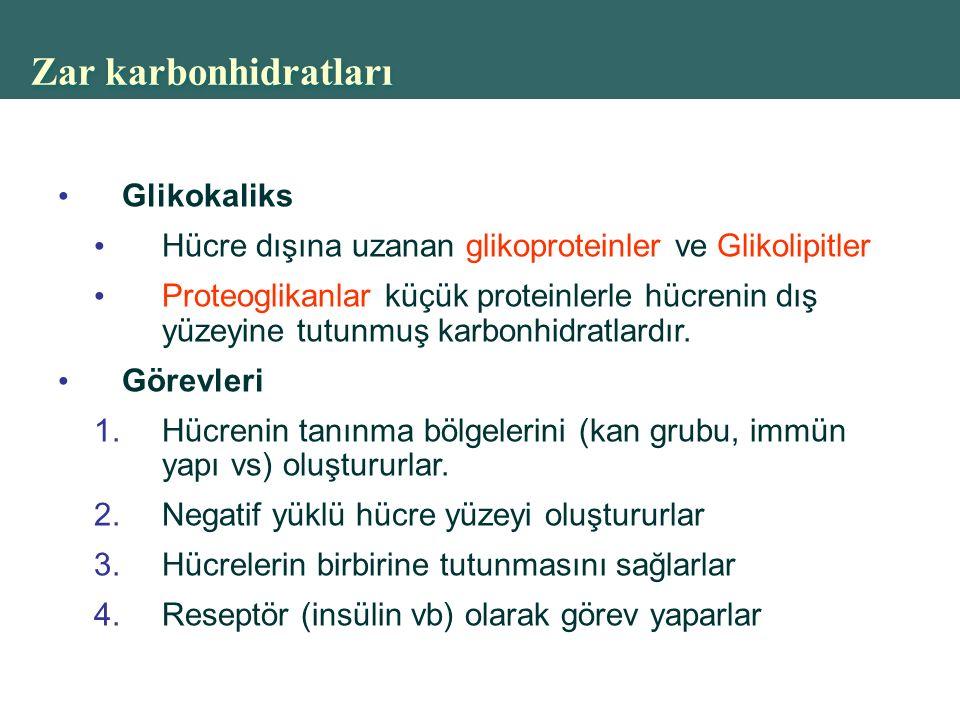 Zar karbonhidratları Glikokaliks