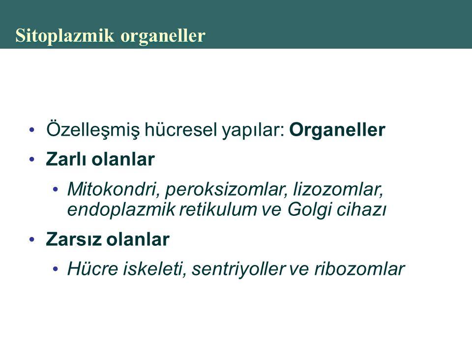 Sitoplazmik organeller