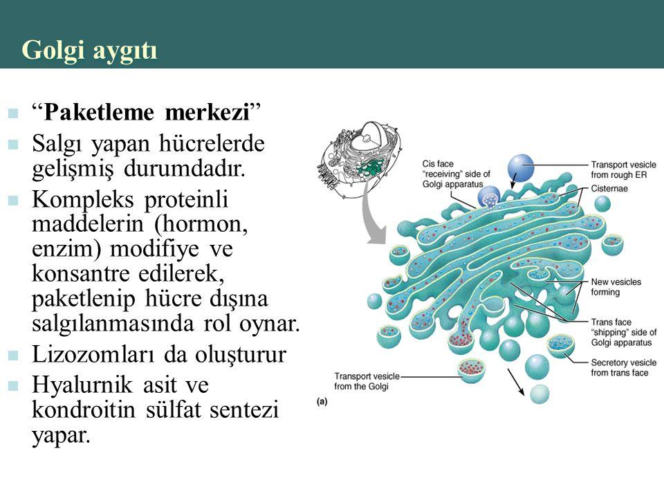 Golgi aygıtı Paketleme merkezi